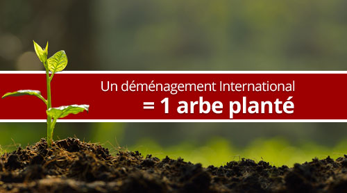 Un déménagement international = un arbre planté
