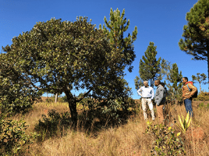 People standing near bushes in Madagascar.